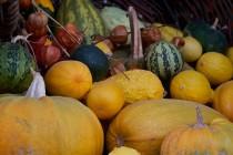 00501-Pumpkins