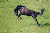 00746-Horse_O