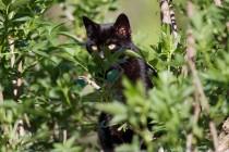 00770-Domestic_Cat