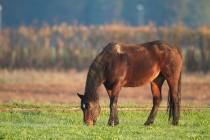 00897-Horse