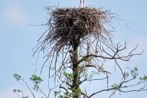 00972-White_Stork