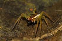 01150-Raft Spider